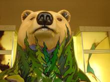 bear91.5