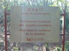 SAYL1