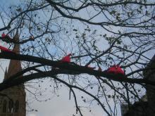 ピンクのハト