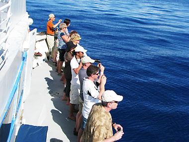 山下マヌーの マヌー式地球の遊び方-クジラを写真に収めようとする