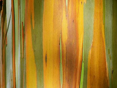 山下マヌーの マヌー式地球の遊び方-これも虹