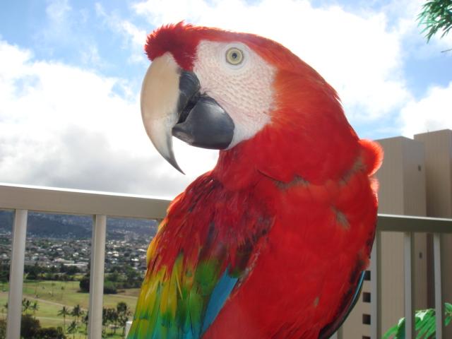 虹 色 インコ