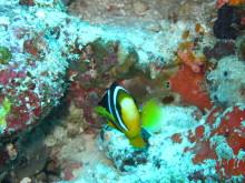 マルハバ! - from Maldives