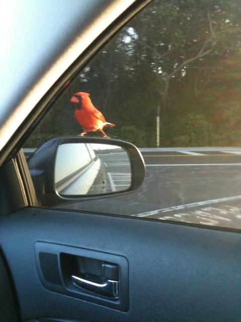 オーランド観光ブログ-赤い鳥