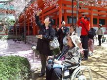 京都 桜 障害